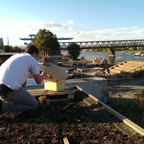 Aufbau Vogelhaus Planke Nord